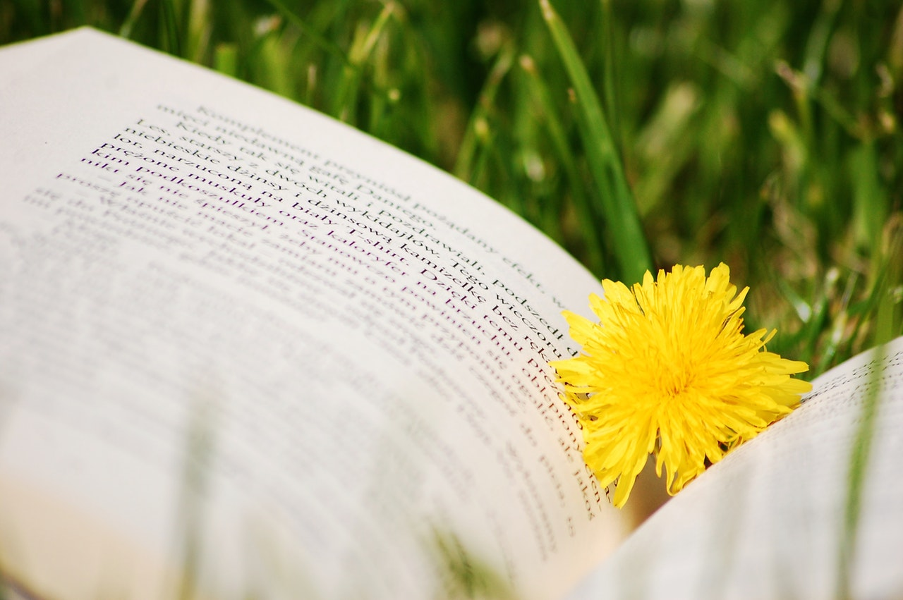 Sommarläsning, bok med blomma